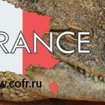 Нильский крокодил украсил обыск у патриота из Петергофа