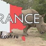 Деньги на спасение носорогов собирают через сайт знакомств